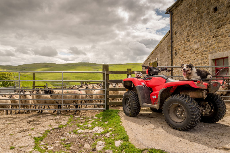 Many rural farms are fed from a spring or borehole supply. Springhill supply, install and maintain equipment needed to ensure the water meets required standards